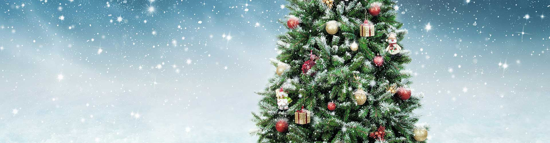 real christmas trees for sale in perth, scotland